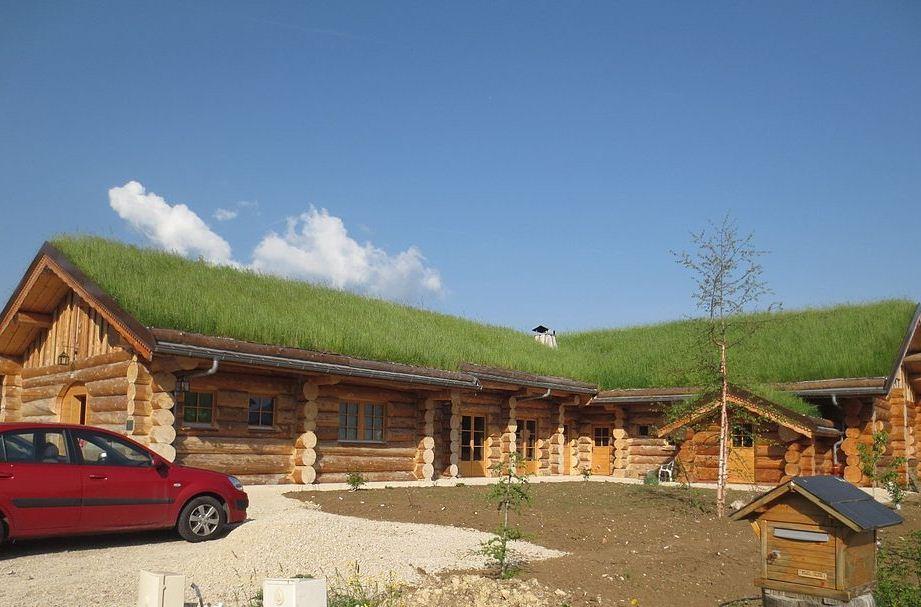 Zoom sur la terrasse végétalisée